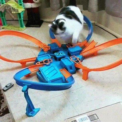 Enlace a Gato frustrado al no ser capaz de atrapar un coche
