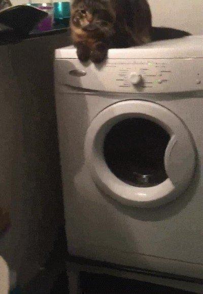 Enlace a Gatos que saben cual es el lugar más cómodo de la casa para un masaje