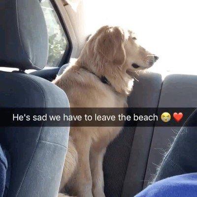 Enlace a Perros que están tristes porque la excursión ha terminado y tienen que volver a casa