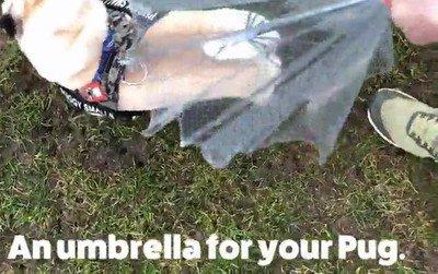 Enlace a Paraguas para perros. Creo que ya lo he visto todo en esta vida