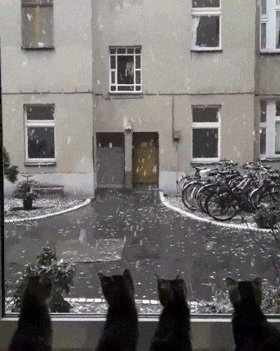 Enlace a Así reacción 4 gatos la primera vez que ven la nieve