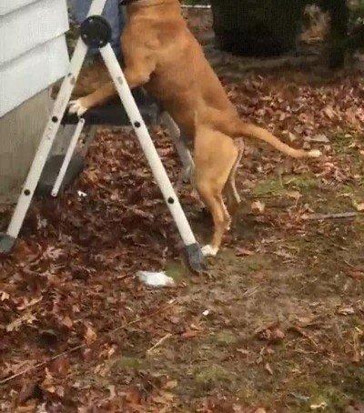 Enlace a Cuando el perro se hace demasiado amigo del pintor