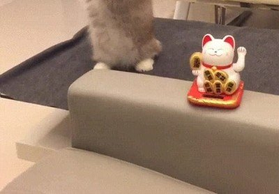Enlace a Gatos que imitan todo lo que tienen delante