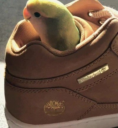 Enlace a Recuerda repasar tu calzado antes de ponértelo