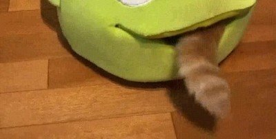 Enlace a Imágenes duras de un gato siendo devorado por un alien