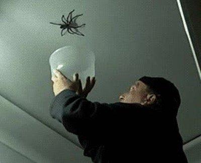 Enlace a Nunca intentes capturar una araña si no eres un experto
