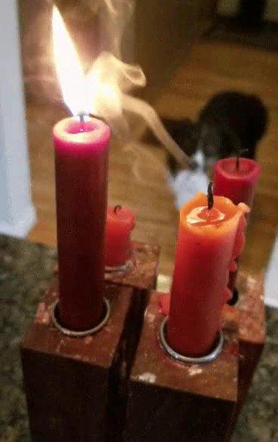 Enlace a El tierno momento en el que una vela salva a su compañera