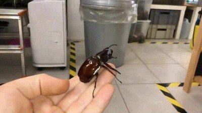 Enlace a Un escarabajo volando en cámara lenta