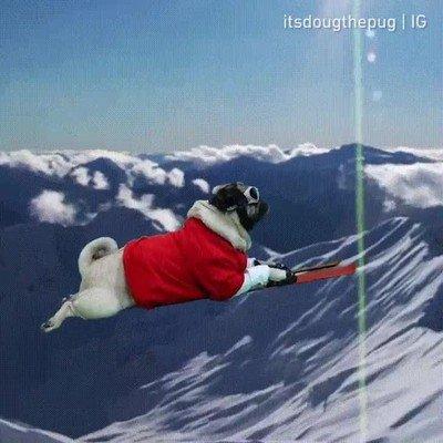 Enlace a Doug The Pug es el campeón olímpico que nos merecemos
