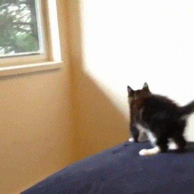 Enlace a Gato saltando a través de una ventana imaginaria