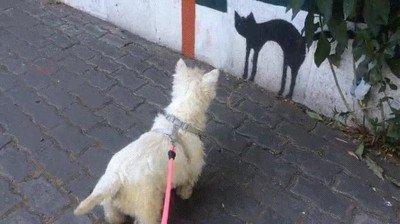 Enlace a Perros que no distinguen un dibujo de la realidad
