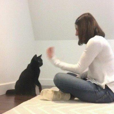 Enlace a Gatos que tienen un saludo secreto como los raperos