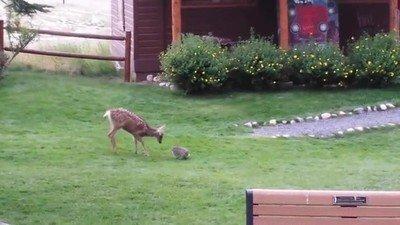 Enlace a Recreación de una escena con Bambi y Tambor en la vida real