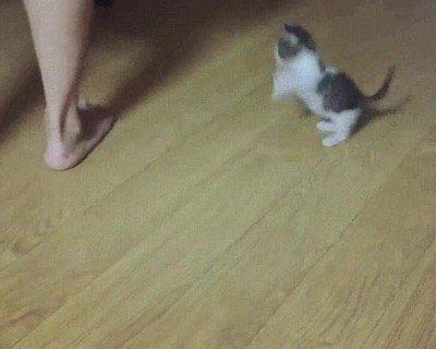 Enlace a Gatito pequeño contra el demonio de los pies.