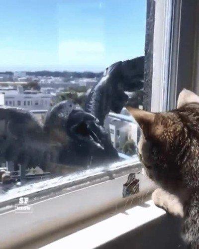 Enlace a Cuervos y gatos que intentan ser amigos