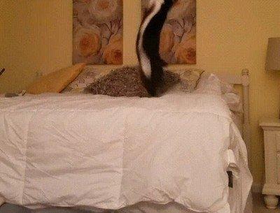 Enlace a Con todos ustedes: un gato con energía infinita