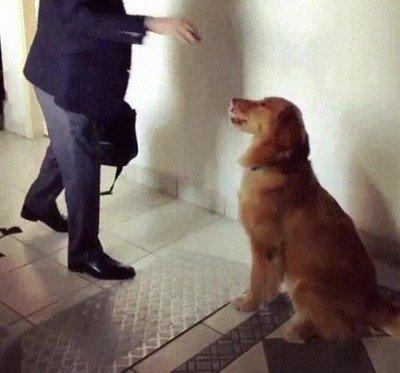 Enlace a Este perro es tan educado que te desea que pases un buen día cada mañana