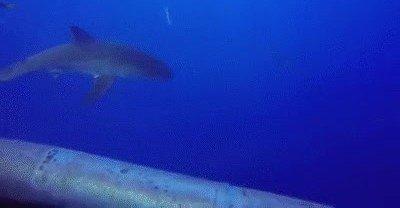 Enlace a Una de las pesadillas de los submarinistas