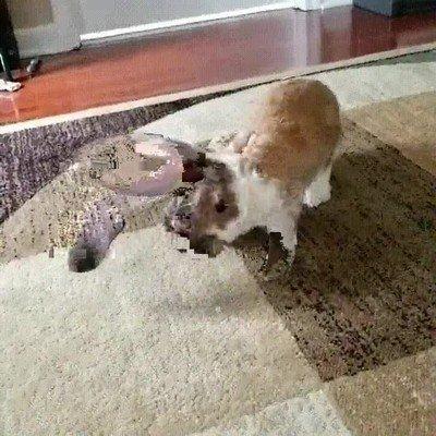 Enlace a El conejo más fabuloso que he visto nunca