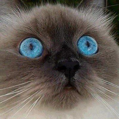 Enlace a Creo que me pasaría el día entero mirando los ojos de este gato