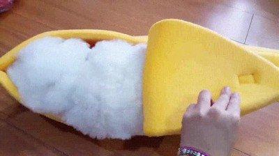 Enlace a Como en un plátano no se dueme en ningún sitio
