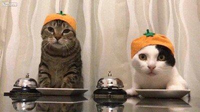 Enlace a Estos gatos saben que tocar la campana tiene recompensa