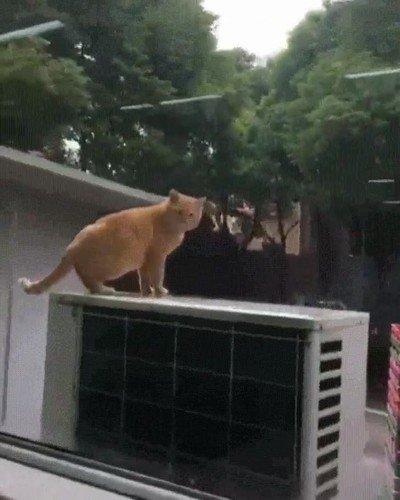 Enlace a Hay saltos gatunos que realmente dan mucha lástima