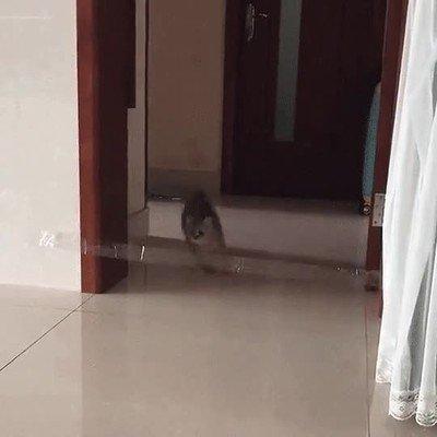 Enlace a Cuando tu gato se siente decepcionada contigo y te mira con mirada triste