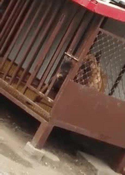 Enlace a El mítico Houdini se ha reencarnado en este perro