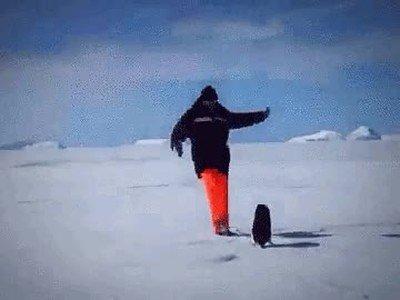 Enlace a Lección del día: Nunca te metas con un pingüino