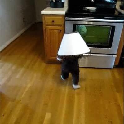 Enlace a Ninguna lámpara ha resultado herida mientras se grababa este vídeo