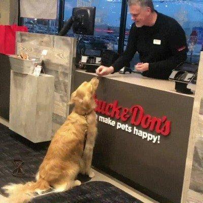 Enlace a Cuando el lema de tu tienda es hacer a las mascotas felices