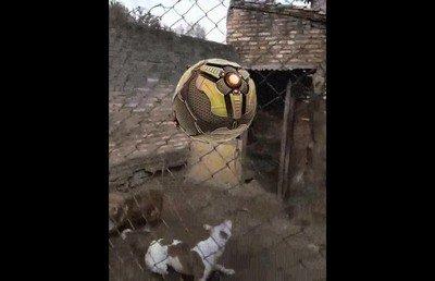 Enlace a Enseñando a jugar a Rocket League a los perros de casa