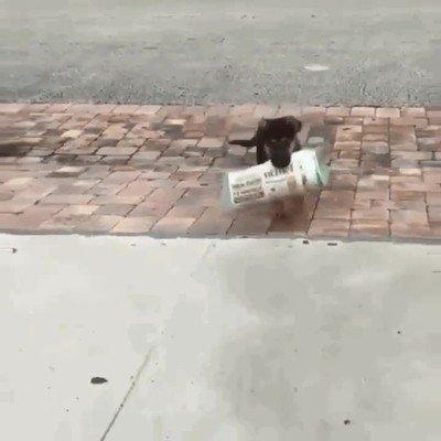 Enlace a Perros que han aprendido a traerte el periódico cada mañana
