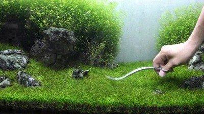 Enlace a La jardinería también puede hacerse en jardines acuáticos