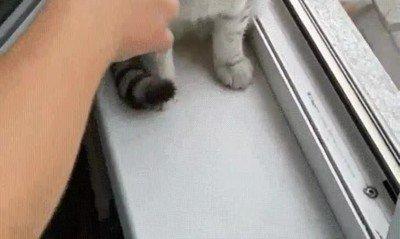 Enlace a CAT.EXE ha dejado de funcionar