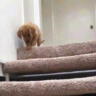 Enlace a Perrito aprendiendo cómo se bajan unas escaleras