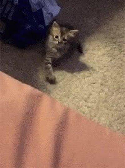 Enlace a Gatos que se comunican con código morse