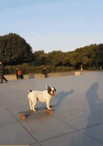 Enlace a Perros que fueron skaters en otras vidas