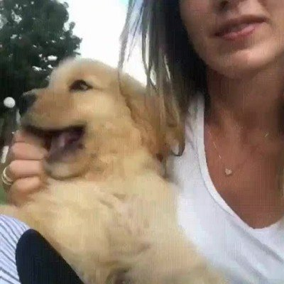 Enlace a Perros que tienen besos para todo el mundo. Nadie se escapa