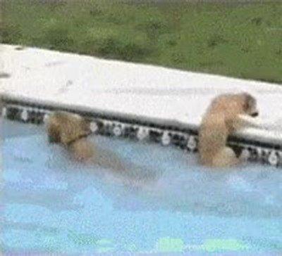 Enlace a A veces los perros son capaces de cosas increíbles