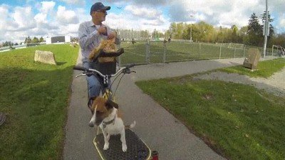 Enlace a Este señor sale a dar un paseo en bici con todas sus mascotas