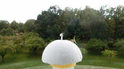 Enlace a Una araña utilizando sus patitas para medir la fuerza del viento