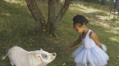 Enlace a El cuento de la princesa y el cerdo