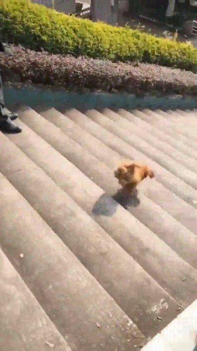 Enlace a Perros que deciden bajar por las escaleras haciendo malabares