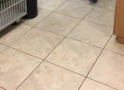 Enlace a Perro reuniéndose con el veterinario que le salvó la vida