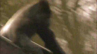 Enlace a Gorilas que se tiran por el tobogán para pasarlo bien