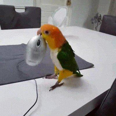 Enlace a Pájaro contento por haber atrapado un ratón