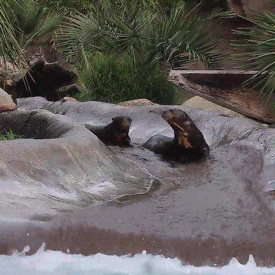 Enlace a Los animales también disfrutan de las atracciones acuáticas