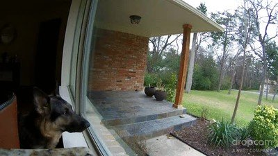 Enlace a La reacción de tu perro cuando lo miras desde una cámara y le dices que pare de ladrar